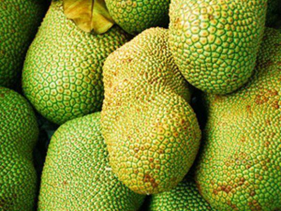 Die Jackfrucht ist ein Geheimtipp, speziell für Veggies und Veganer: Ihr Fruchtfleisch lässt sich unreif verwenden wie Hähnchenbrust!