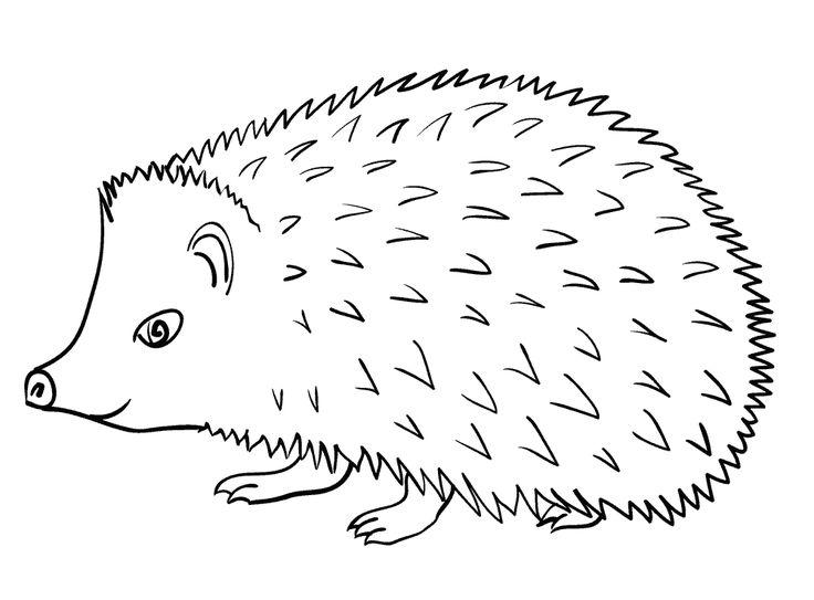 Пин от пользователя Ivan Ivanov на доске Hedgehogs \ ёжики ...