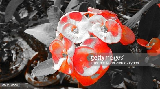 Stock Photo : Flowers Growing At Yard