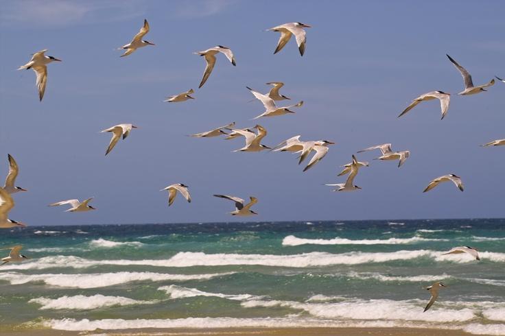 birds flock together ........