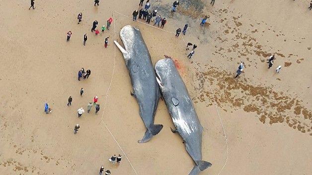 Are wind turbines killing whales?