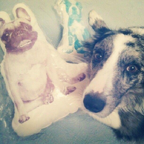 www.decolovin.com  #dog #cushion #cojin #areaware #decolovin #shop #decor #bulldog #decoracion #home #decor #casa #diseño #design #cojin #perro Web Instagram User » Followgram