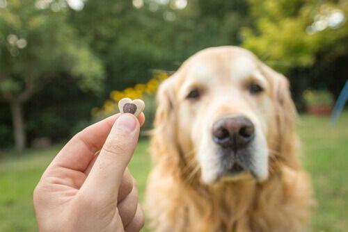Educare il vostro cane ... Si sente spesso dire che una delle cose più importanti riguardo all'educazione di un cane sia che quest'ultimo sia in grado di rispettare certi regole