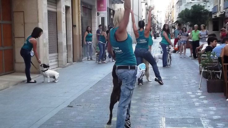 Primer #lipdubcanino by @Ànima Canina en alma cafe , Ontinyent