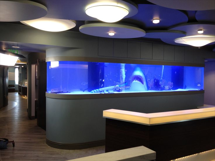 17 best images about tanked aquariumns awesome on for Pool show on animal planet