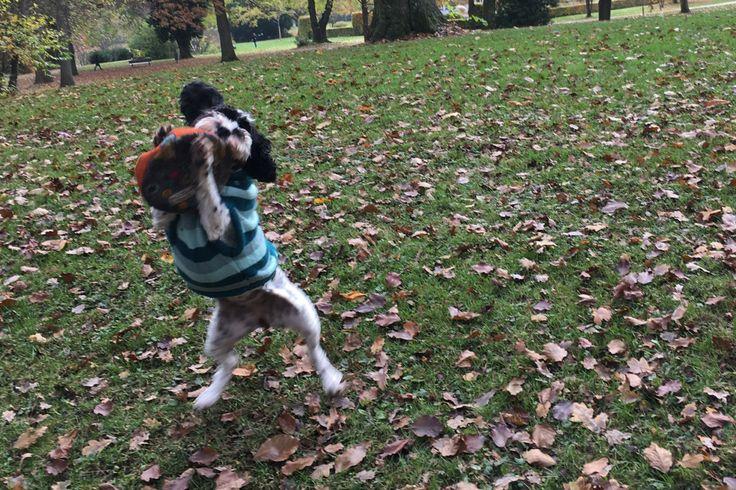 "HundeFrisbee ""Spiel, Spass"