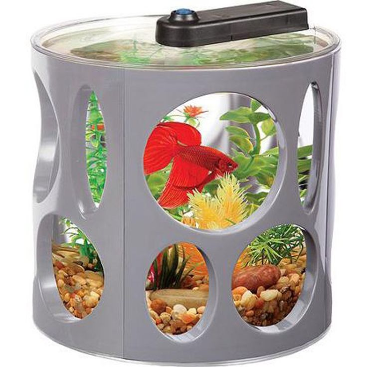 188 best images about aquariums fish bowls and fish tanks for Betta fish tanks amazon
