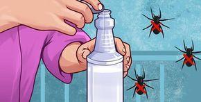 Come allontanare ragni e insetti in modo naturale | Rimedio Naturale