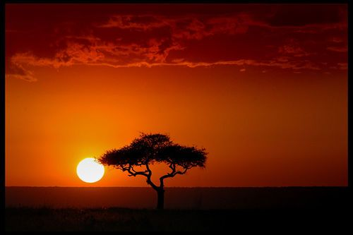 kenya: Bucket List, Nature, Masai Mara, Sunsets, Places I D, Kenya, Travel, Africa, Photo