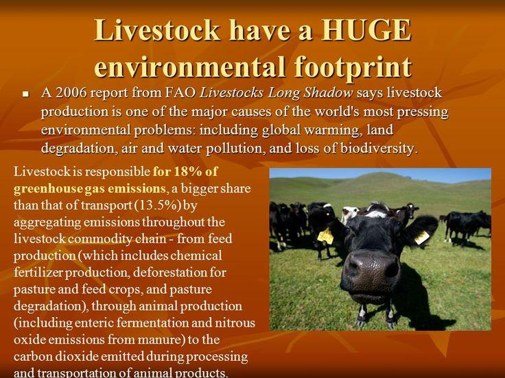 Livestocks Long Shadow Environmental Issues And Options Pdf