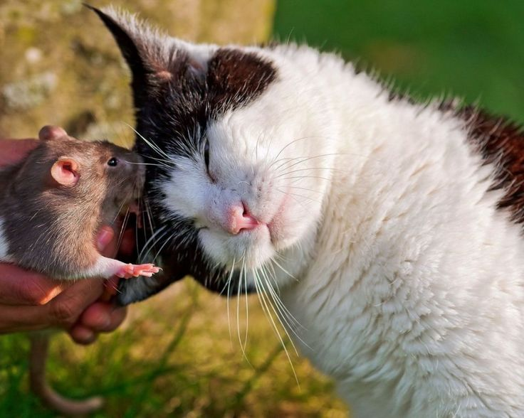 cute mouse and cat cuddling