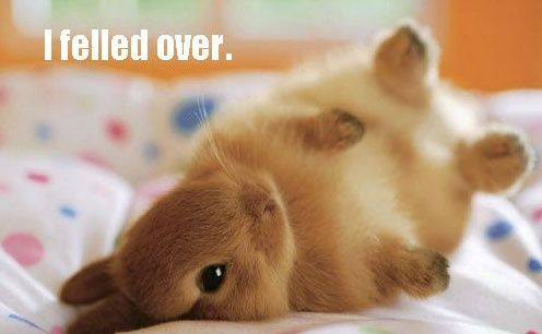 I Felled Over: Fluffy Bunnies, Cute Animal, Cute Baby, So Cute, Baby Bunnies, Bunnies Rolls, Cutest Bunnies, Cute Bunnies, Baby Animal