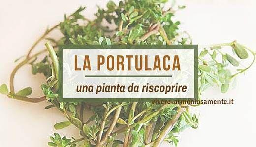 Conosciamo le propriet della portulaca oleracea o erba for Portulaca commestibile