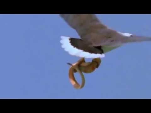 Amazing  Birds' Attacks - YouTube