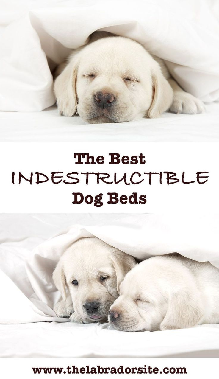 the of indestructible dog infographic anatomy an bed