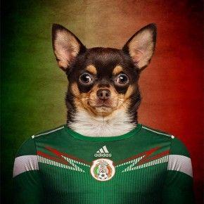 Perros de la Copa Mundial de Brasil 2014  Chiguagua Mexicano