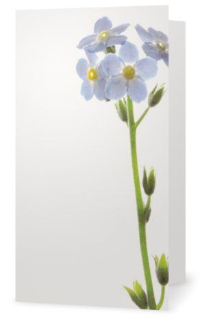 Forget-me-not. Cards for florists. Gift card for flower arrangements. Scandinavian design. Jäderberg & Co.