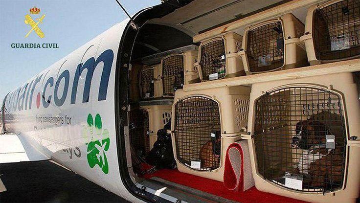 ICYMI: Incautan en El Prat transportines de perro que podrían ser usados como urnas