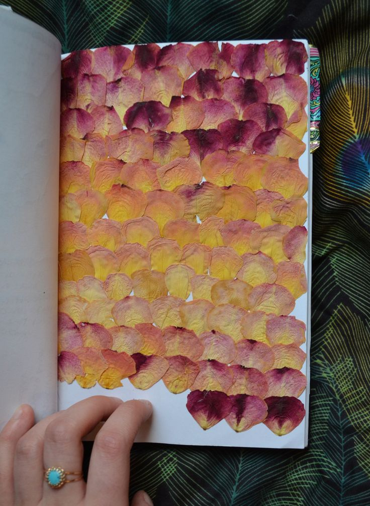 chic-ahh-go:  Sketchbook Page 59 Pressed rose petals. I had a giant bouquet of dead, dried up roses, so I took the fallen petals and pressed them It smells kinda nasty tbh. Not like roses