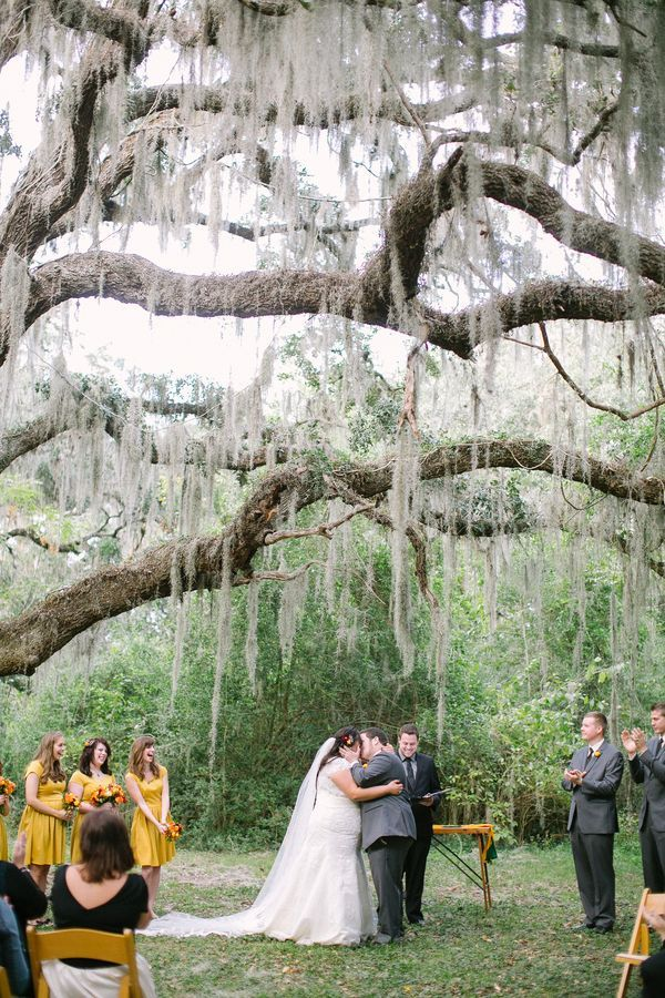 intimate wedding venues south england%0A Intimate ceremony in Brazos Bend State Park under a live oak tree draped  with Spanish moss