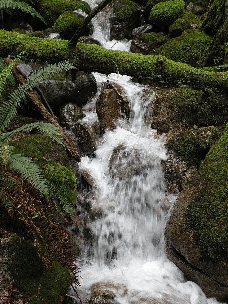 Mountain Stream, Baden Powell Trail, North Vancouver, BC