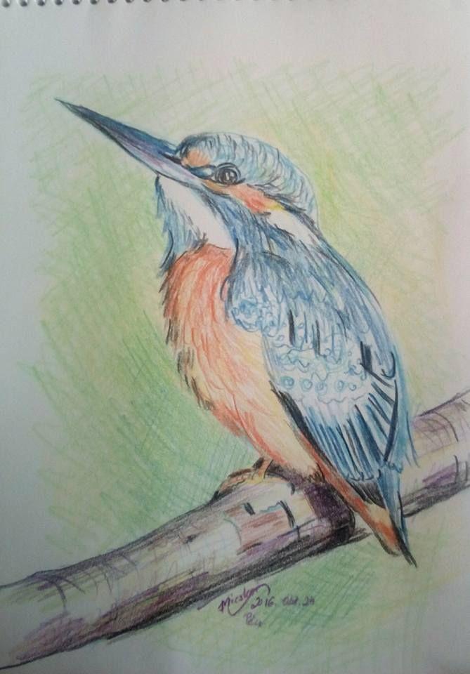 jégmadár - III--madár8- -színes ceruza rajz- -24x17 cm