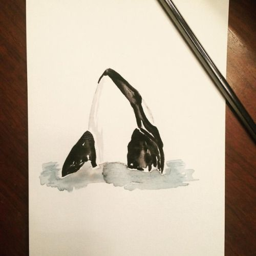 Orca by Felicity Mehrtens