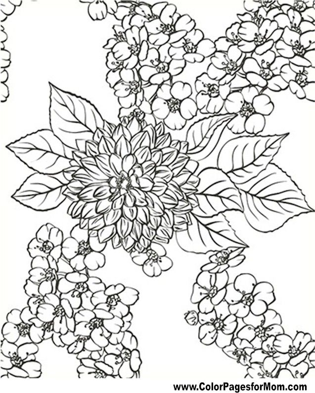 advanced coloring pages flower coloring page 80