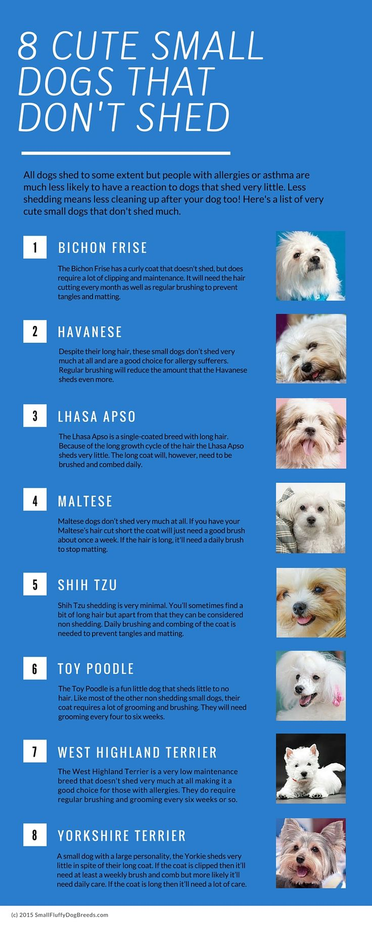 Small Dog Breeds That Don't Shed Infographic