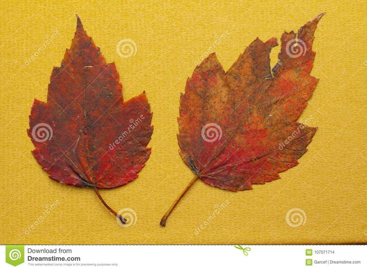 Fall Leaves On Golden Background Stock Photo - Image of fall, golden: 107071714
