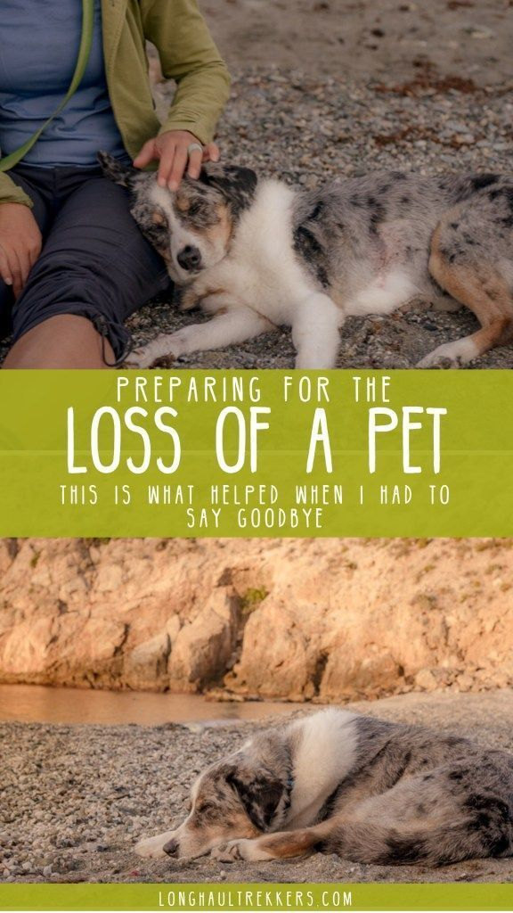 Pin On How To Deal With Pet Loss