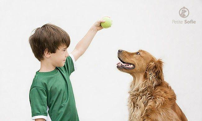 """O método de """"reforço positivo"""" faz com que seu cão lhe obedeça e tenha ótimo comportamento sem qualquer necessidade de punição ou violência. Veja mais em blog.petitesofie.com.br"""