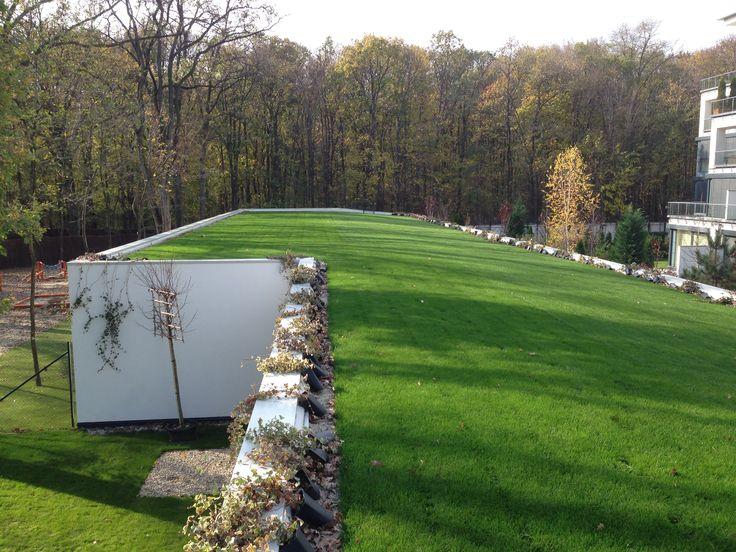 Acoperisuri verzi profesionale - Hidroizolatii - STEJARI, Baneasa 700 mp_1 http://hidroizolatiiromania.ro/portfolio/hidroizolatie-terasa-verde-si-jardiniera-gradinita-complex-stejari-baneasa-700-mp/