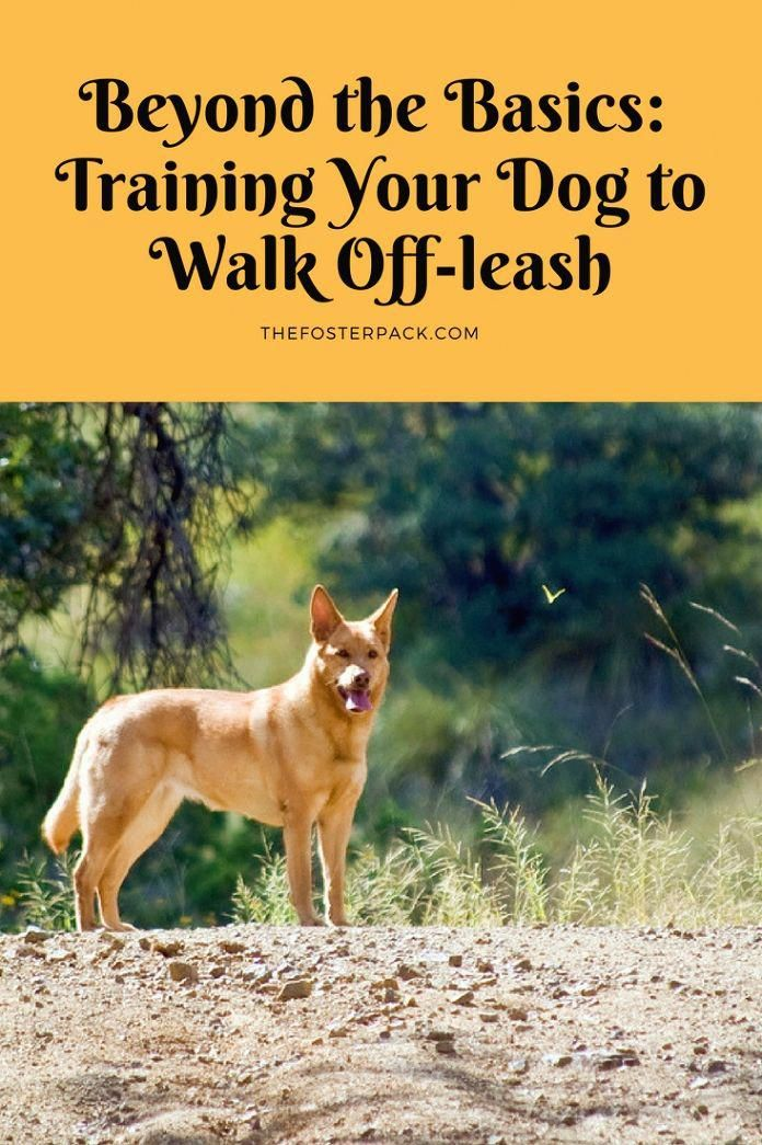 Intuitive Dog Training How To My Review Here Training Your Dog