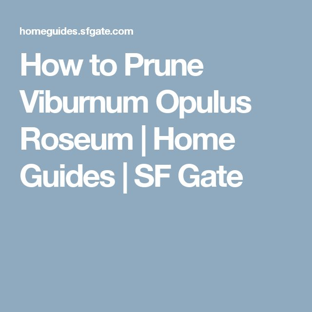 How to Prune Viburnum Opulus Roseum | Home Guides | SF Gate