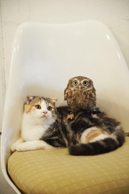 TVやネットで話題のフクとマリモは、種を超えた友情を育むふくろうと猫。会った瞬間からとっても仲良しなんです。そんなふたりがいる「HUKULOU COFFEE」は大阪・中崎町にあるイタリアンカフェ。かわいいコンビが待っている、素敵な場所を訪れてみませんか?