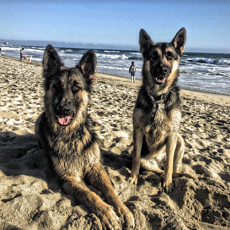 79 besten ρατσες σκυλων Bilder auf Pinterest   Hunde, Hundebabys und ...