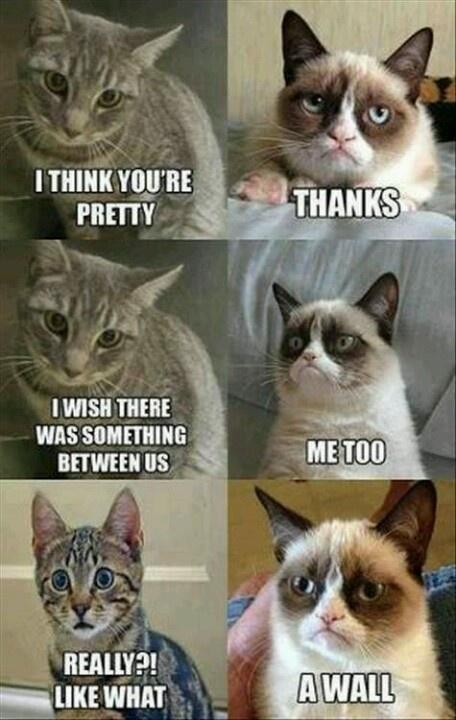 Grumpy cat :-)