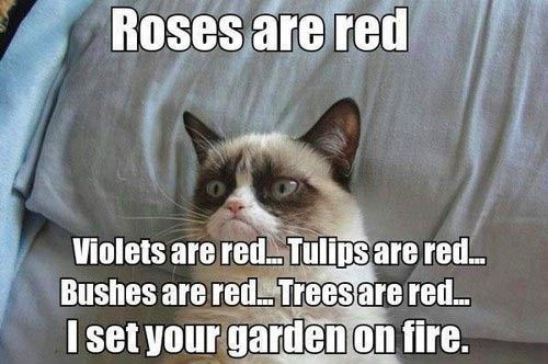 Grumpy Cat is feeling poetic… Checkout even more helpful articles and other content via http://atcemsce.org/best-home-first-aid-kit/