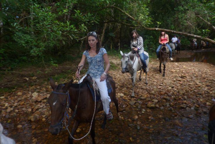Domando caballos salvajes en  los morichales del llano