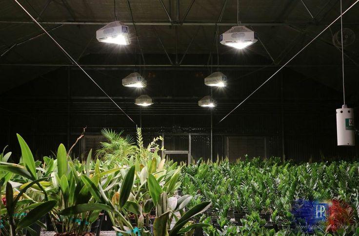 30 best images about indoor gardening grow lights on pinterest gardens horticulture and led. Black Bedroom Furniture Sets. Home Design Ideas