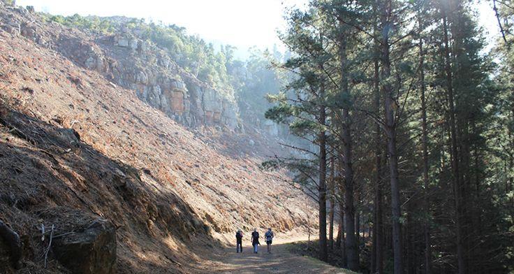 Best hikes in Cape Town: Constantia Nek to Kirstenbosch