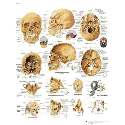 13 mejores imágenes de Skull en Pinterest | Cráneos y calaveras ...