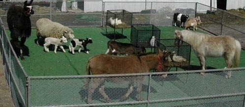 such and such farm | ... farm,mobile petting farm,mobile petting zoo,farm animals,farm party