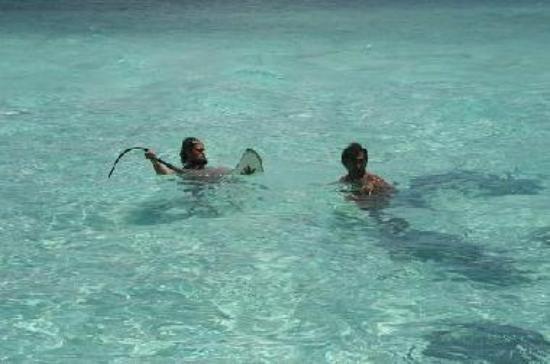 Sting Ray´s Bora Bora