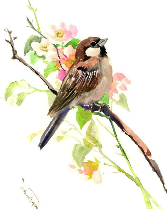 Sparrow And Spring Blossom art, 10 X 8 in, original watercolor painting  sparrow art, sparrow painting, bird art, sparrows, yard birds,