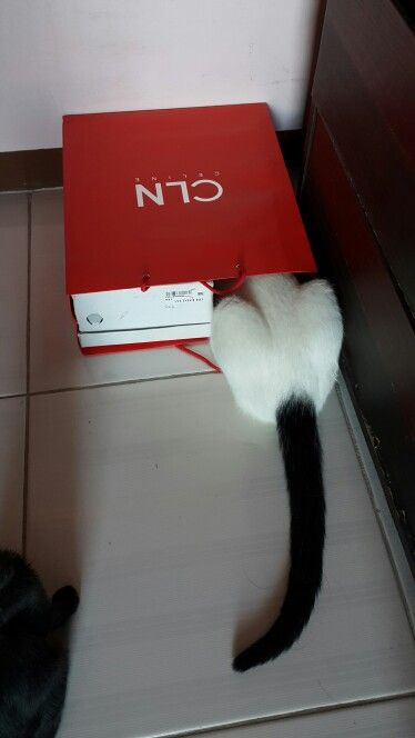Cat in the box... charie