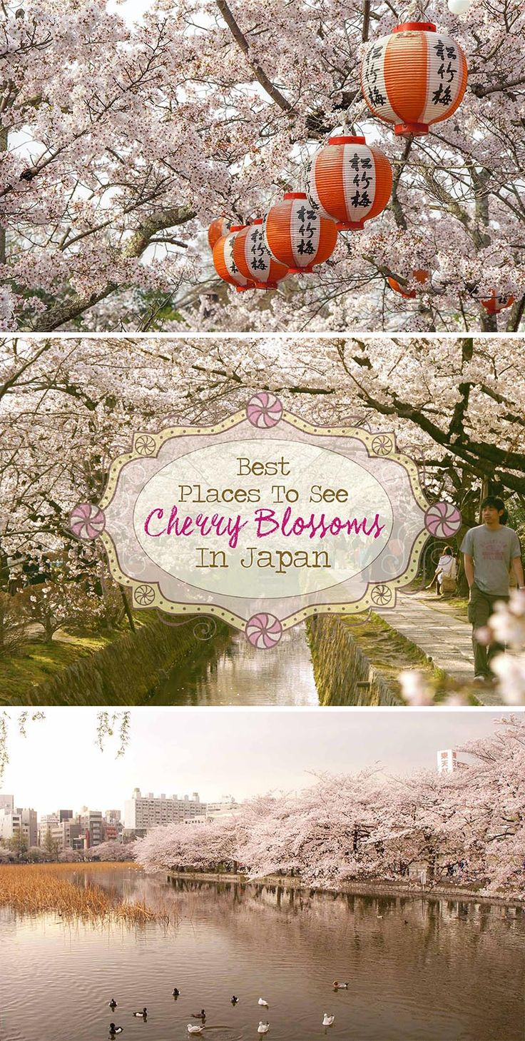 Best Places to see Cherry Blossoms in Japan. Travel to the most stunning locations and get the best photographs of the sakura in Tokyo, Kyoto & Hiroshima