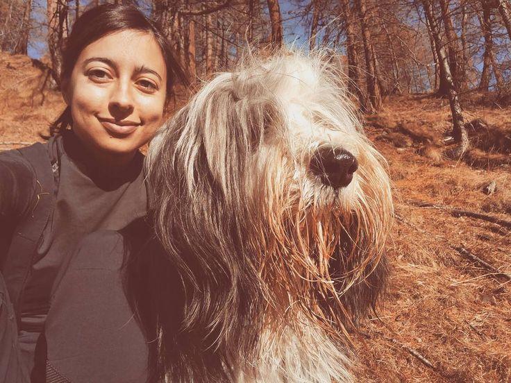 Io e il mio amico Storm ce la spassiamo sempre in montagna  #naso #beardedcollie