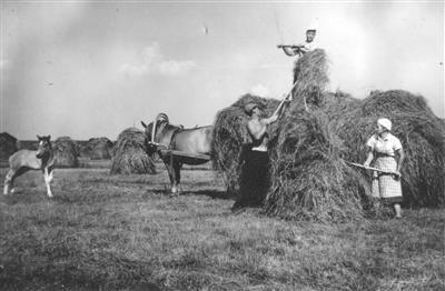 Finnish horse and foal ... Heinän korjuuta ... harvesting hay ... Finland